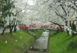 002桜まつり3_799